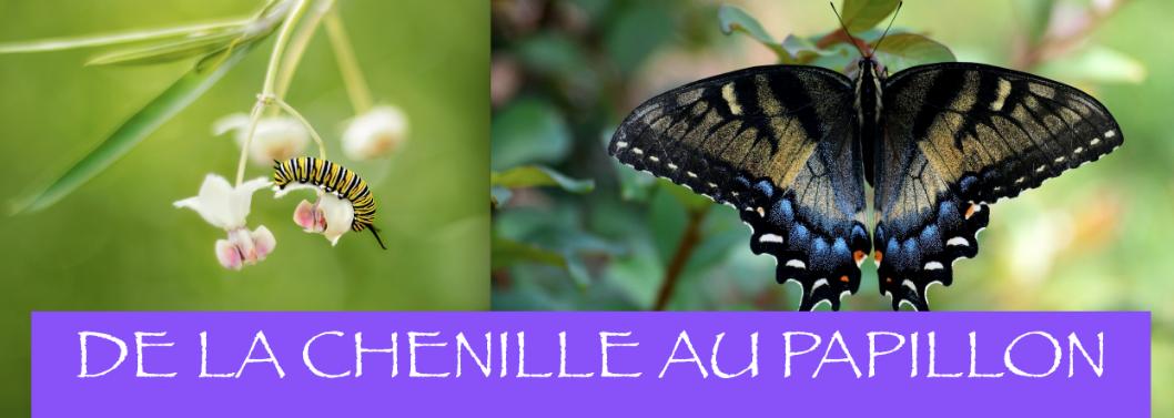 Nouveaux ateliers : De la chenille au papillon